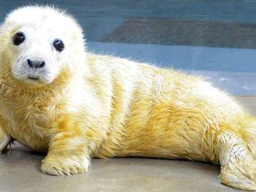 Cría de foca nacida en el Smithsonian