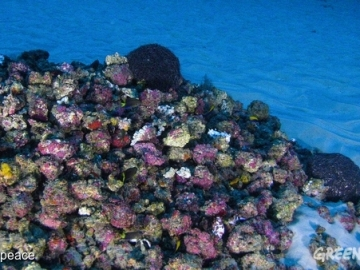 Dos científicos consigue captar las primeras imágenes del arrecife único del Amazonas