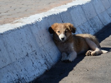 Siete consejos para prevenir que tu perro se pierda