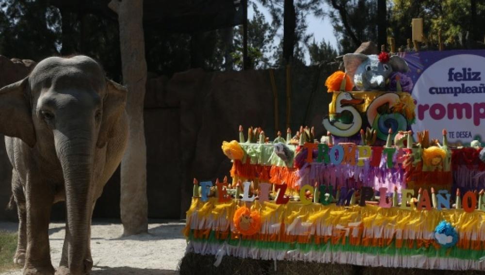 La icónica elefanta de Guatemala 'Trompita' cumple 56 años