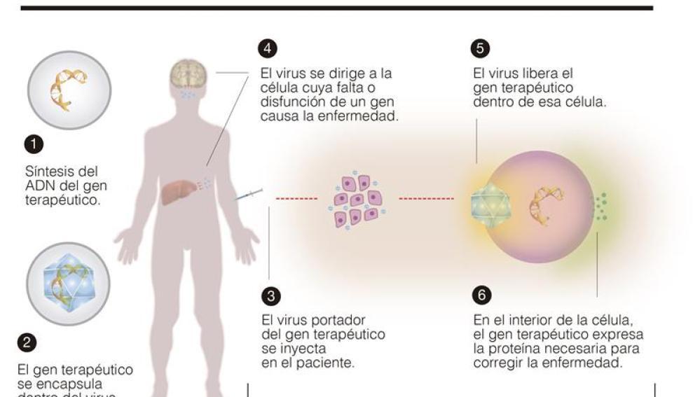 Las enfermedades raras, originadas por un solo gen, podrían curarse con la terapia génica