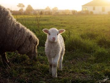 PACMA pide a las Comunidades Autónomas que regulen los santuarios de animales