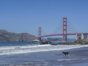 San Francisco obliga a las tiendas de mascotas a vender solo animales rescatados