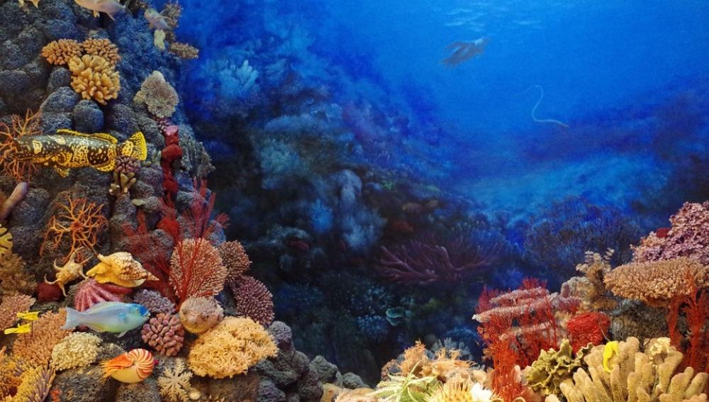 Las zonas muertas marinas amenazan a los arrecifes de corales de todo el mundo