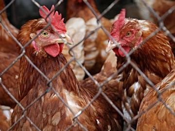 México debate condenar el maltrato animal tras una denuncia de Igualdad Animal