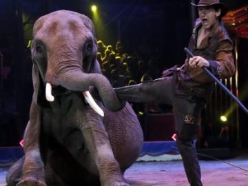 Imagen de un circo con animales