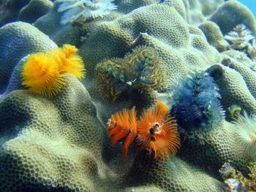 Ecosistemas marinos del Mediterráneo