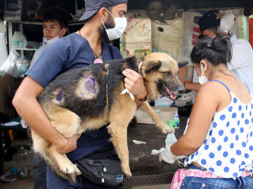Un refugio cuida a los animales que sobrevivieron a la avlancha de la ciudad colmbiana de Mocoa