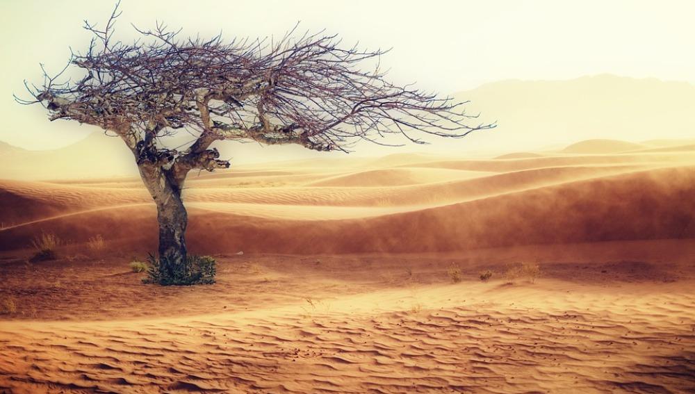 Un estudio con 1.166 especies confirma los efectos del cambio climático