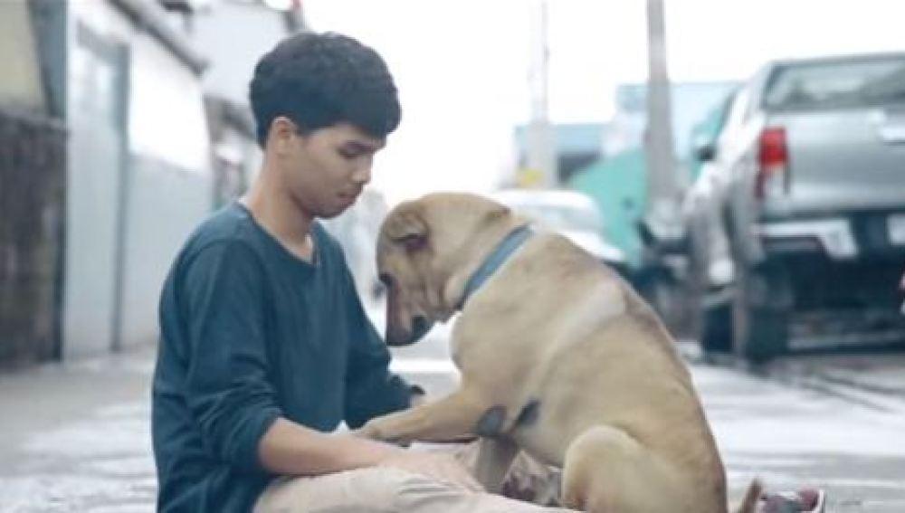'El primer abrazo', un proyecto para concienciar sobre el maltrato animal