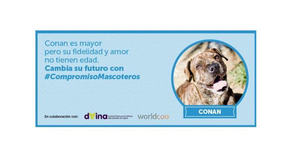 #CompromisoMascoteros, una iniciativa dedicada a la defensa de los derechos de los animales