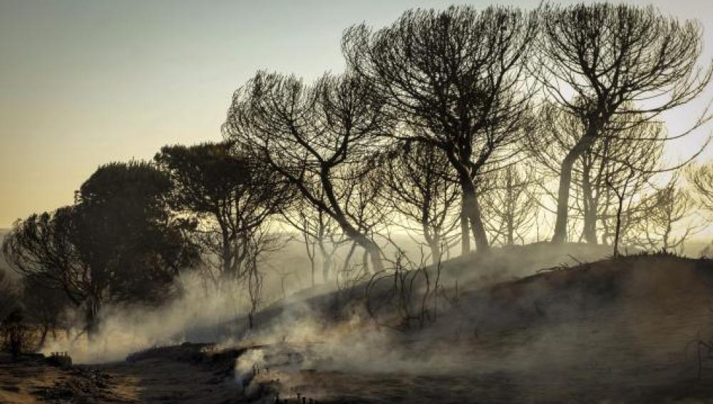Foto de Archivo del Incendio de Doñana