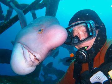 Un japonés lleva 25 años buceando para visitar a su amigo pez