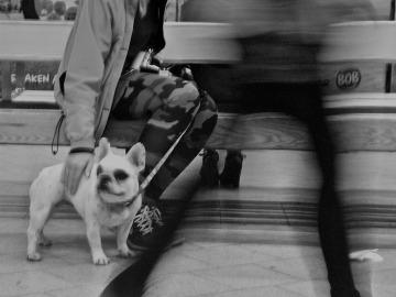 Unos 350 perros se desplazan al día en el Metro de Madrid