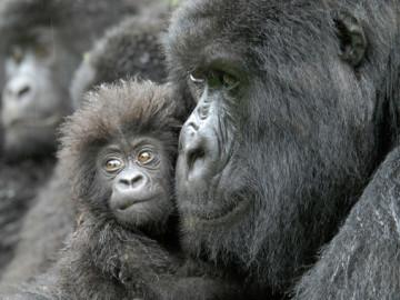 Un nuevo estudio preve una extincion masiva de animales vertebrados
