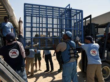 """""""Misión imposible"""" rescata a un los animales de la Disneylandia siria"""