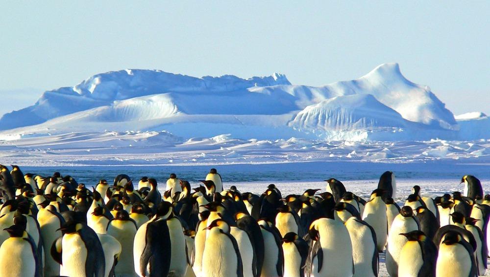 Los pingüinos portan contaminantes al ecosistema terrestre