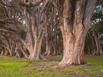 Imagen de archivo de un árbol centenario