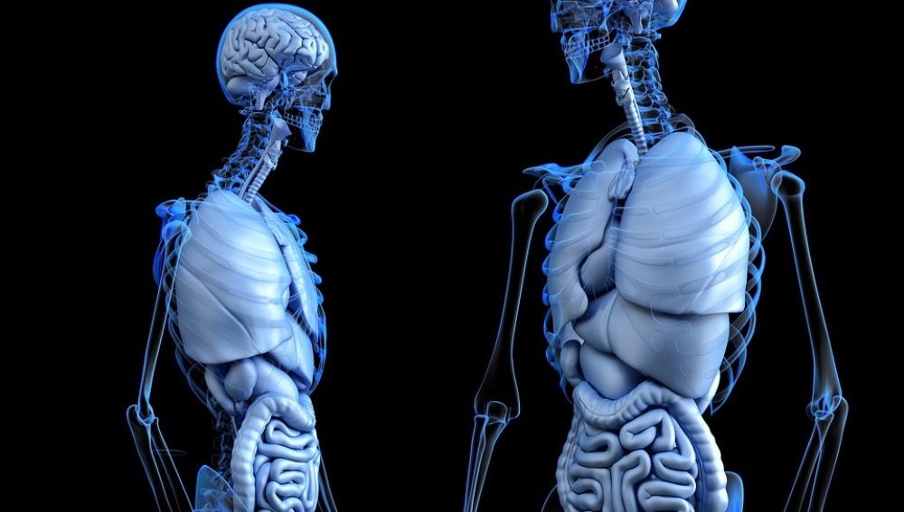 El hígado graso podría causar daños a otros órganos