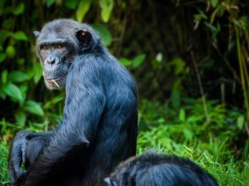 Prueban en monos una terapia celular contra el Parkinson
