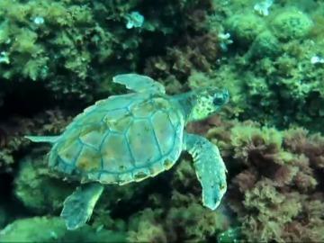 'Kowabunda', una iniciativa para concienciar sobre la importancia de proteger a la tortuga marina