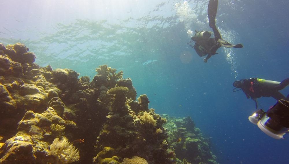 Foto de archivo de un arrecife de coral