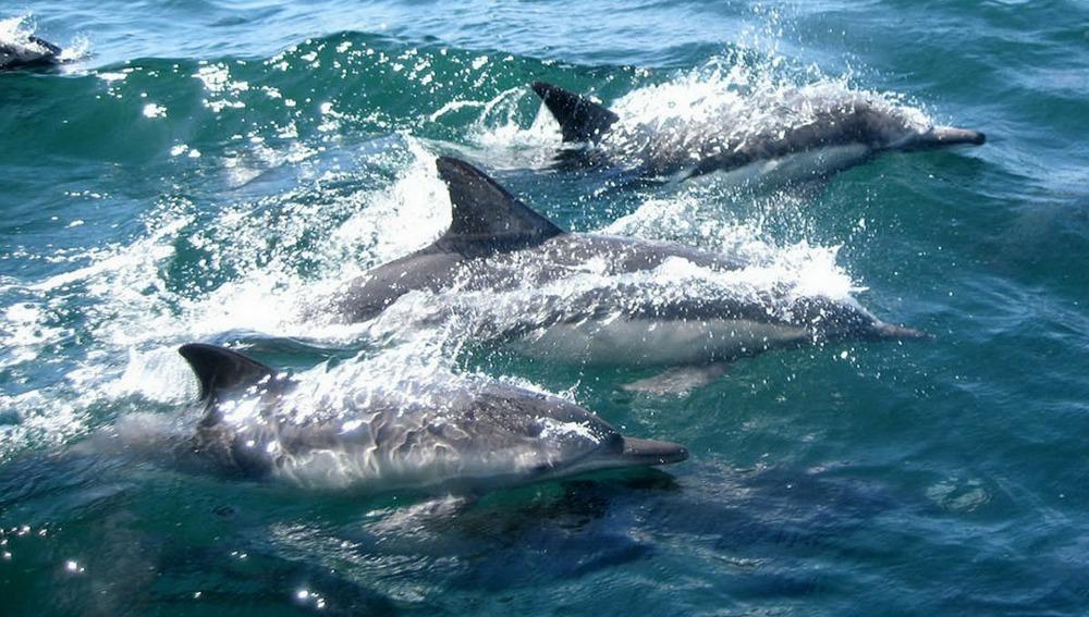 Delfines en grupo