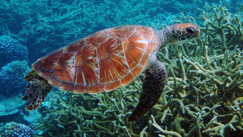 Fotografía de archivo de una tortuga