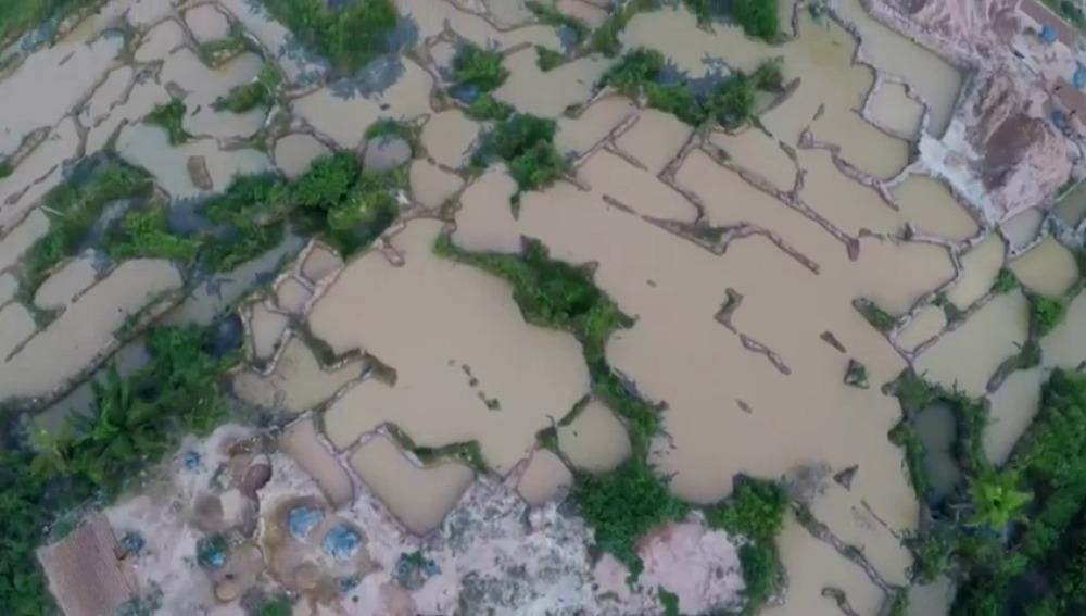 Más de 15.000 científicos exigen que se tomen medidas urgentes para proteger el planeta