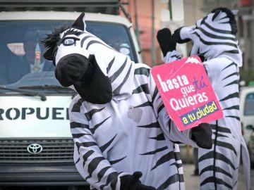 Un grupo de jóvenes cebras velan por la seguridad vial en las ciudades de Bolivia