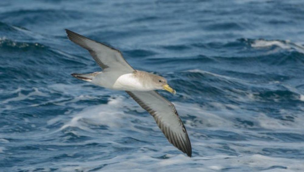 Un estudio señala las zonas que requieren protección de las aves migratorias