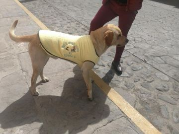 Un hombre regala chalecos a perros callejeros para que no pasen frío