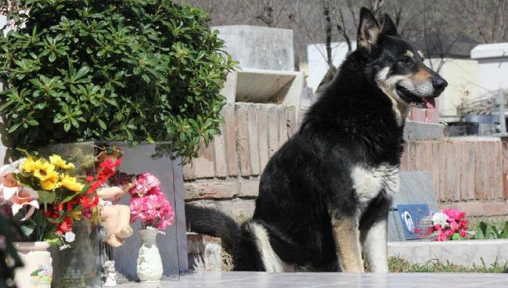 El perro 'Capitán'