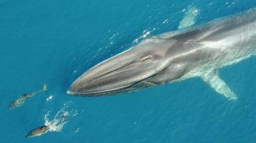 Un grupo de pescadores avistan las dos primeras ballenas de la temporada en Tarragona