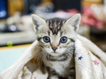 Gato | Imagen de archivo