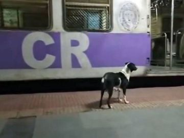 El misterio caso de la perra que espera al mismo tren noche tras noche