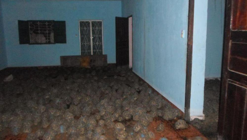 Rescatadas más de 10.000 tortugas de una vivienda