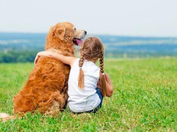 los perros son el principal reservorio del parásito causante de la leishmaniosis