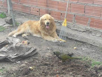 Una mujer ofrece su coche como recompensa para quien le ayude a encontrar a Santino, su perro perdido