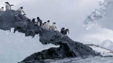 Greenpeace exige la creación urgente de un Santuario Antártico tras encontrar plásticos y químicos peligrosos en la Antártida
