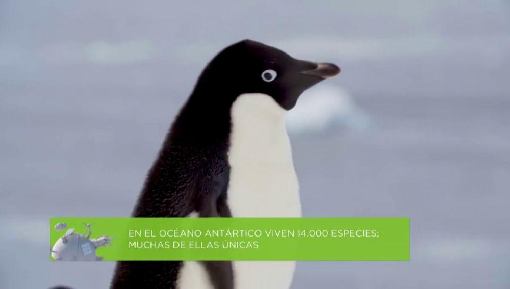 ¿Por qué es necesario que el océano Antártico se convierta en la mayor área protegida del planeta?