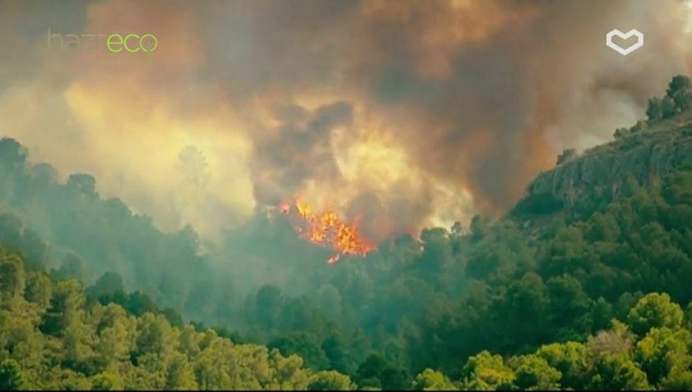 Este verano extrema la precaución y 'no dejes que las palabras se las lleve el fuego'