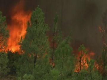Los incendios forestales, un problema medioambiental que afecta a todos