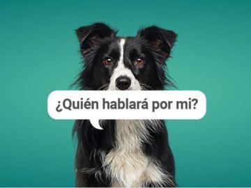 'Quién hablará por mí', campaña contra el maltrato animal del Oasis Park Fuerteventura