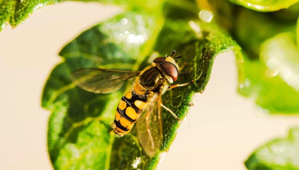 Francia prohíbe cinco pesticidas para proteger las colonias de abejas