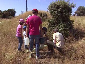 Reforesta: una ONG que cuida miles de árboles para conseguir la regeneración natural