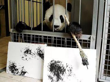 Yang Yang, la osa panda que pinta cuadros en el zoo de Viena