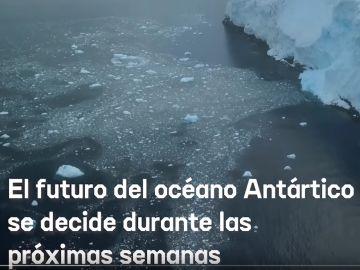 España apoya la creación del Santuario Antártico