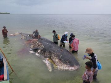 La ballena hallada muerta en Indonesia
