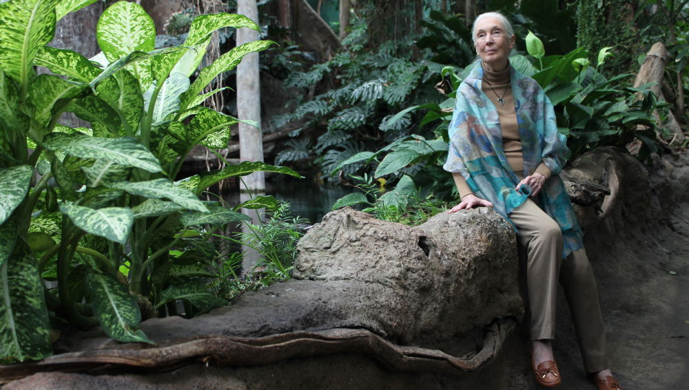 Jane Goodall Estamos viviendo la sexta extincion masiva de especies